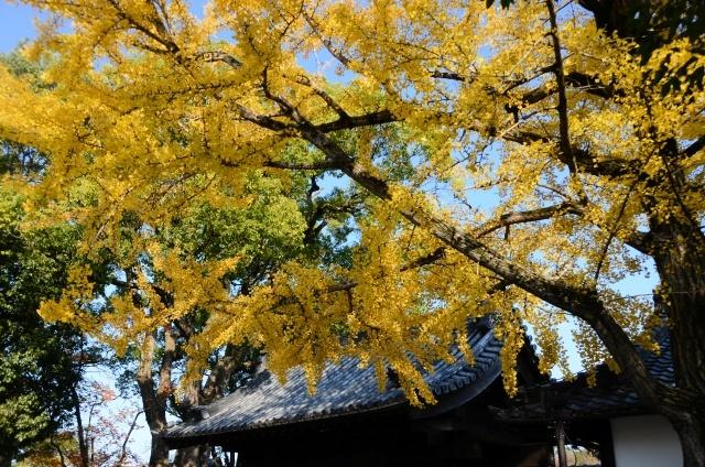 s1-徳川園1711287_8106xx64.jpg