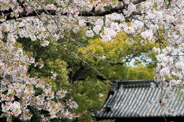s1-徳川園180401C00413xx64.jpg