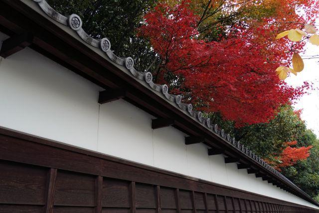 s1-徳川園の紅葉DSC02802xx64.JPG