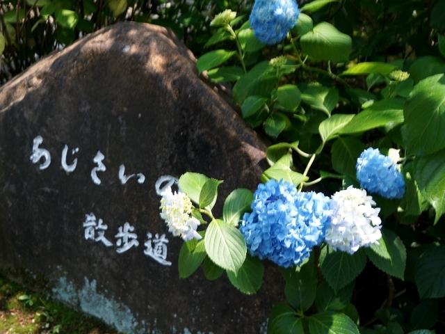 s1-鶴舞公園170610DSC07667xx64.JPG