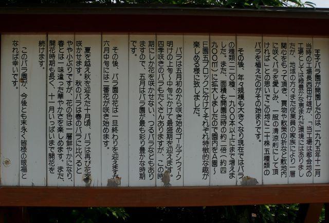 s2-王子バラ園160520DSC06281xx64.JPG