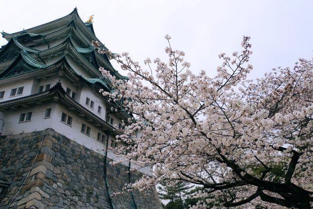 s5-名古屋城DSC05489xx64.JPG
