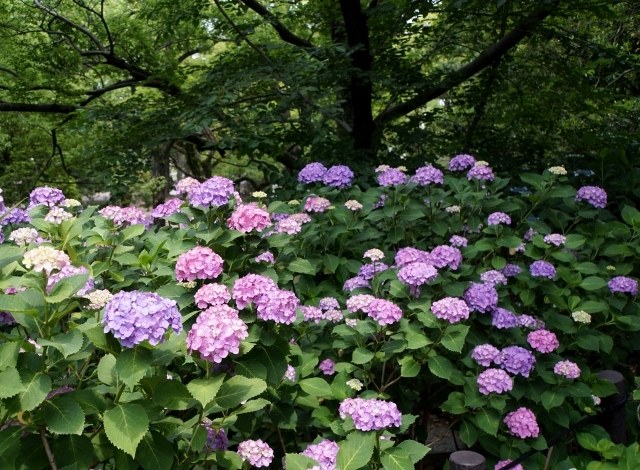 s5-鶴舞公園170610DSC07619xx64.JPG