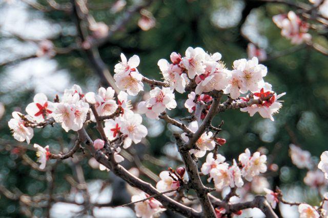 s7-德川園DSC04617xx64.JPG